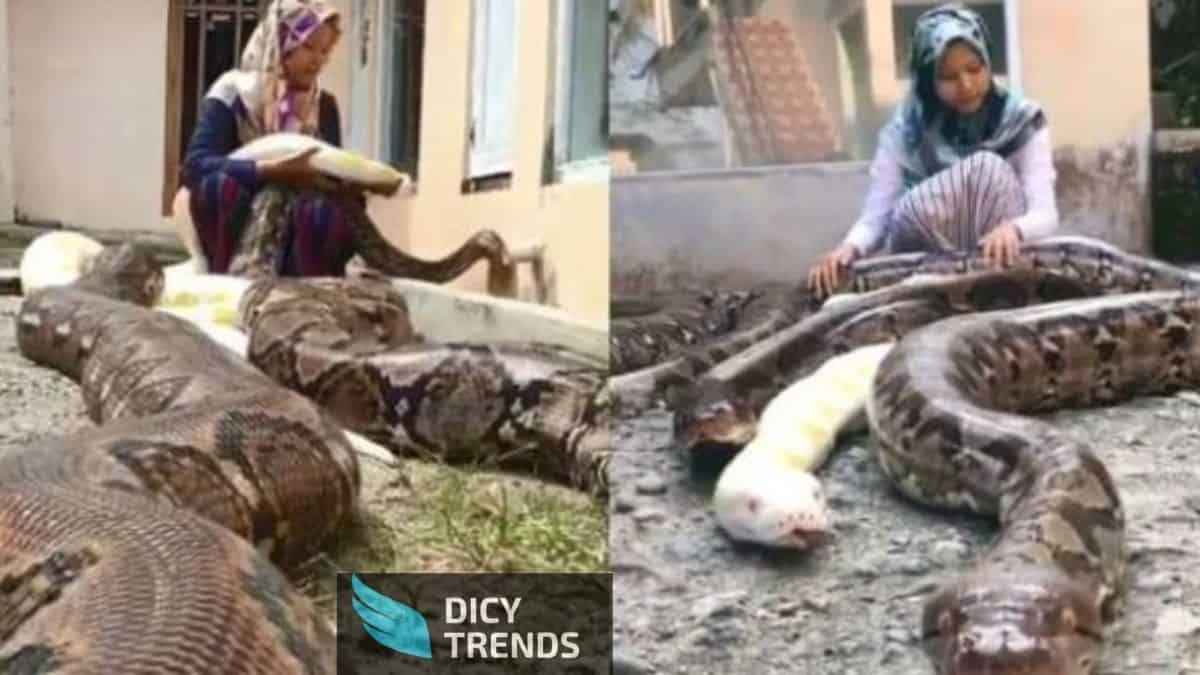 Read more about the article Watch Video:14-Year-Old Girl Who Has 6 Pythons As Pet