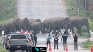 Disappeared Elephants from Ghana in 2005 spotted returning in 2021.