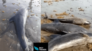 Dolphins Appear Ashore At Axim, Ghanaian Authorities Investigate .